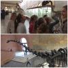 Палеонтологический музей (3